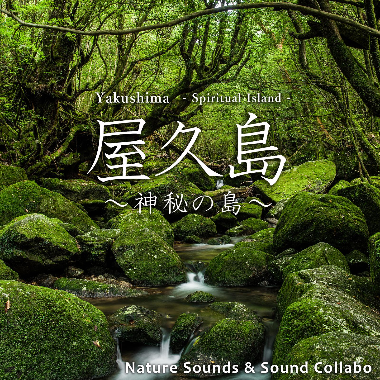 Image of 屋久島 ~神秘の島~