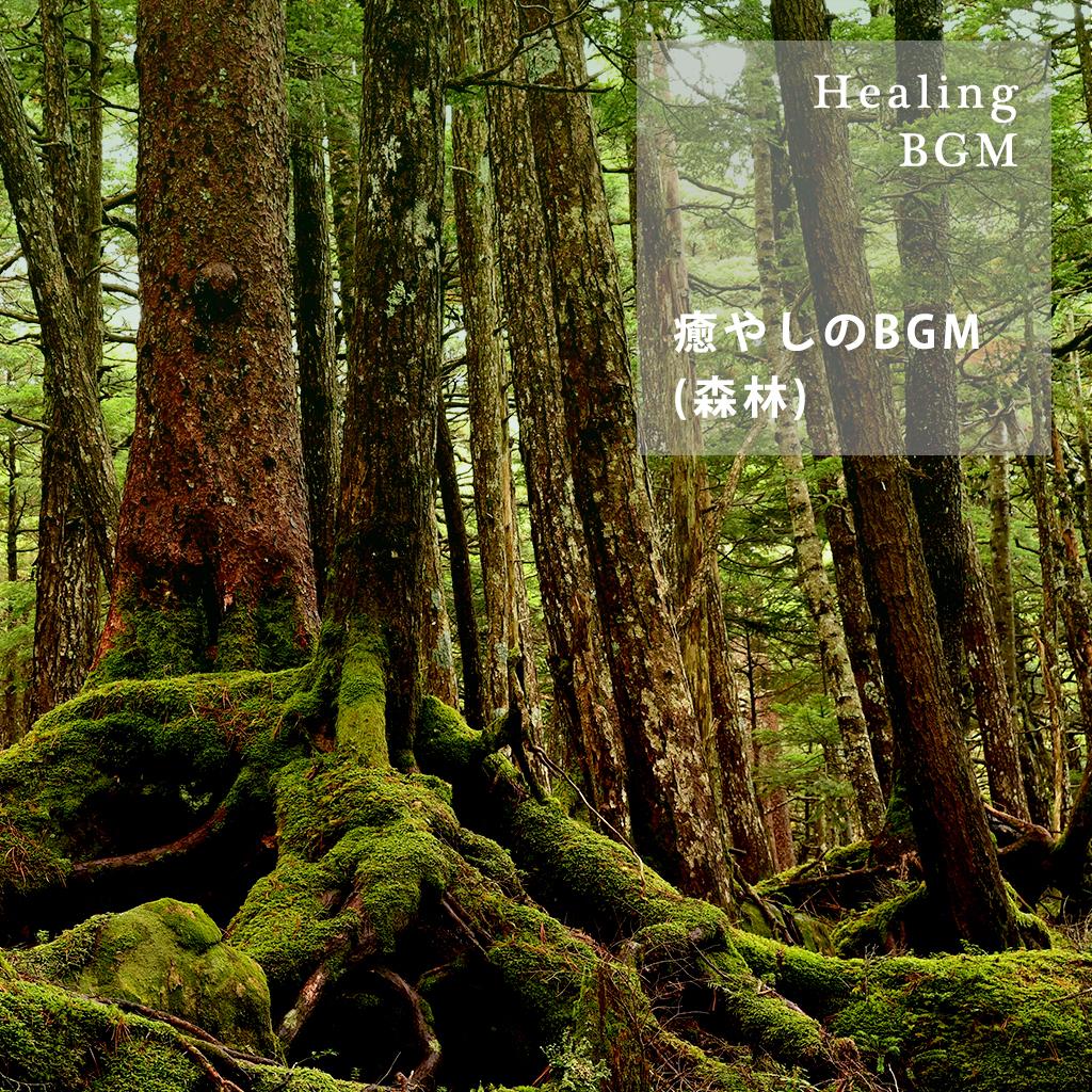 Image of 癒やしのBGM (森林)